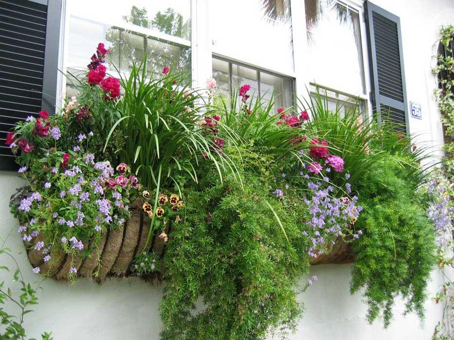 букеты и композиции из живых цветов
