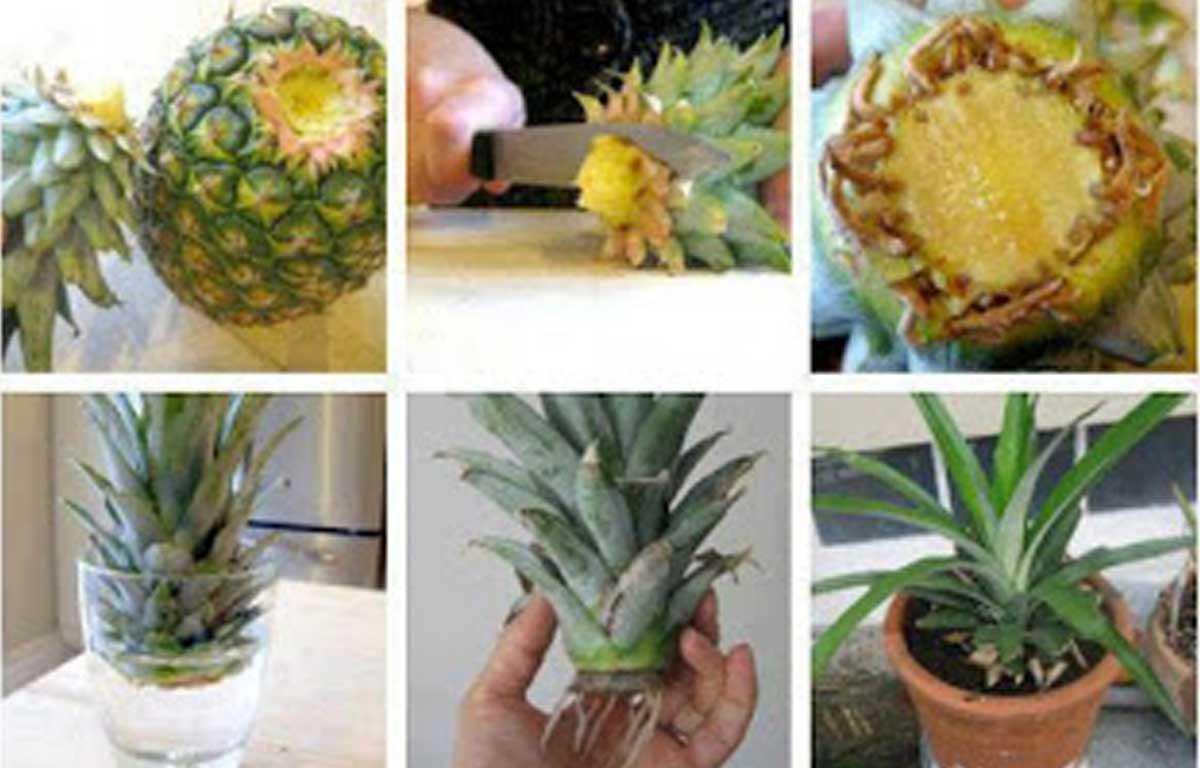 необычное выращивание