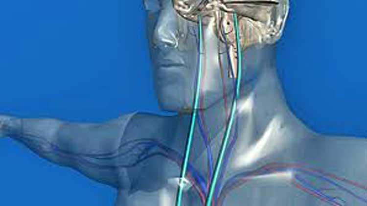 Блуждающий нерв