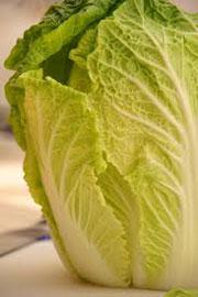Изображение - Бизнес на выращивании пекинской капусты pekin511