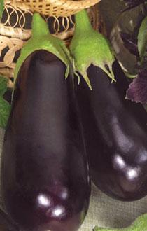 Секреты выращивания баклажанов в теплице
