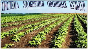Удобрения овощных культур