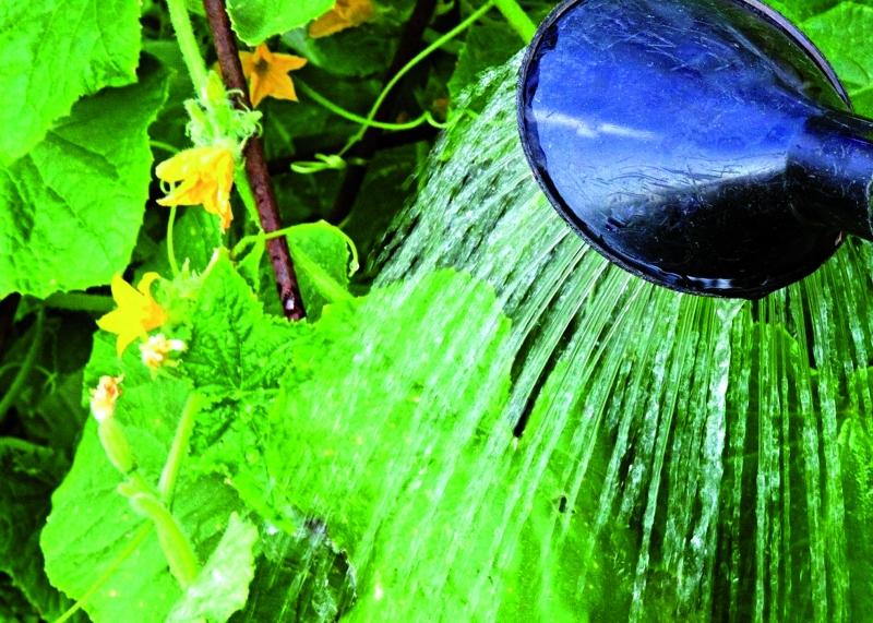 Полив овощных культур - виды и нормы полива