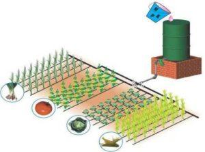 Внесение удобрений при поливе - фертигация овощных культур