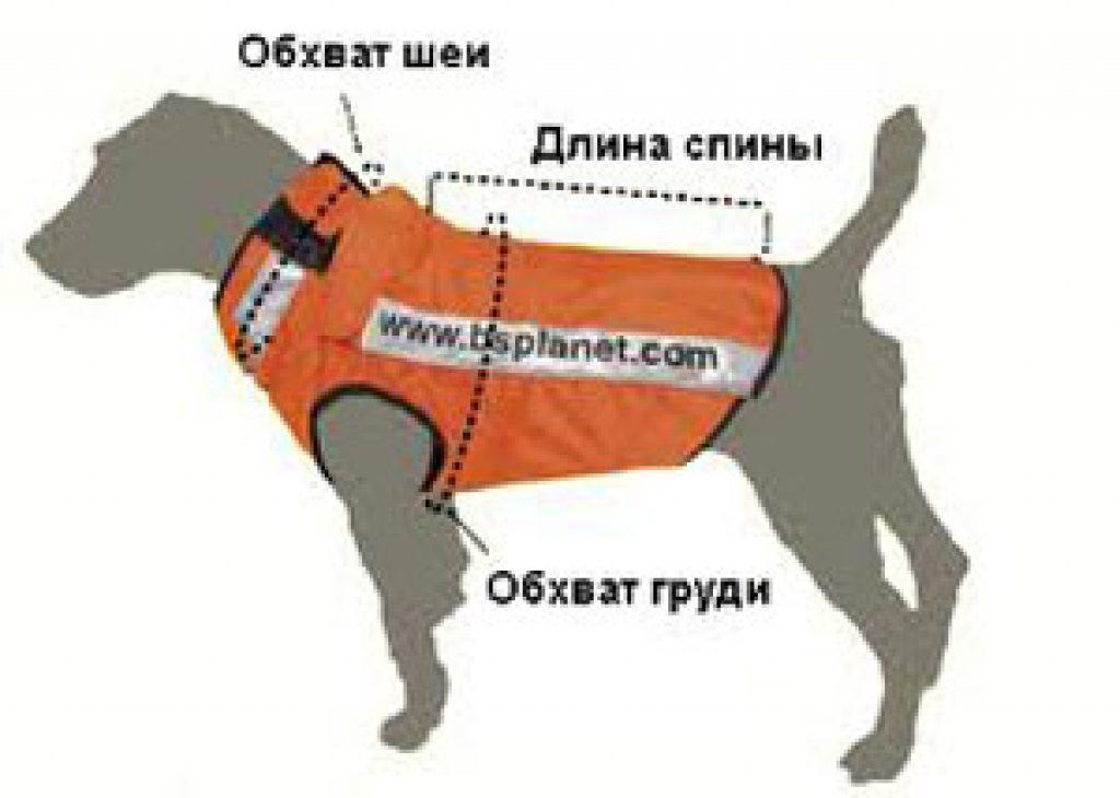 как связать жилет для собаки одежда для собак домашний бизнес