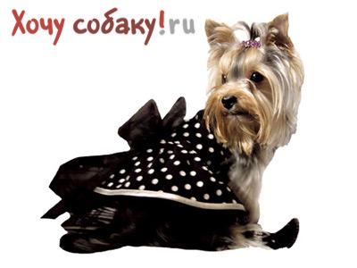 Как связать платье для собаки