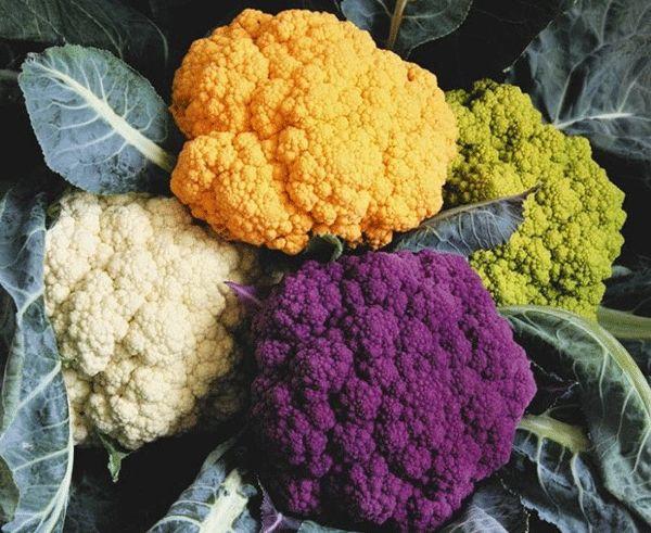 Описание капусты белокачанной предпочтения к почве,питанию и другие особенности