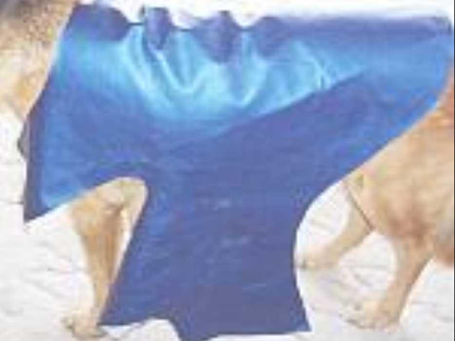 Шитье одежды для собаки
