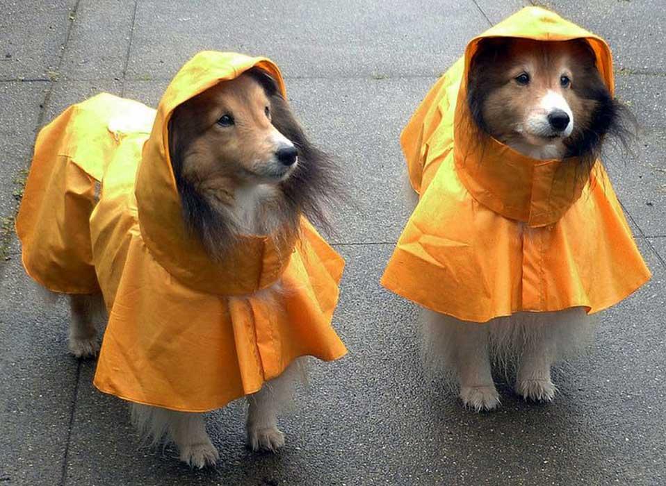 Дождевик для собаки: как сшить в домашних условиях