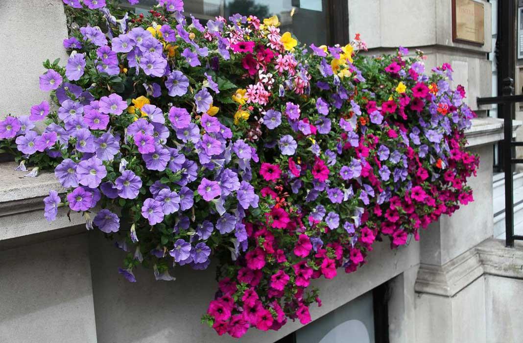 красивые композиции из цветов