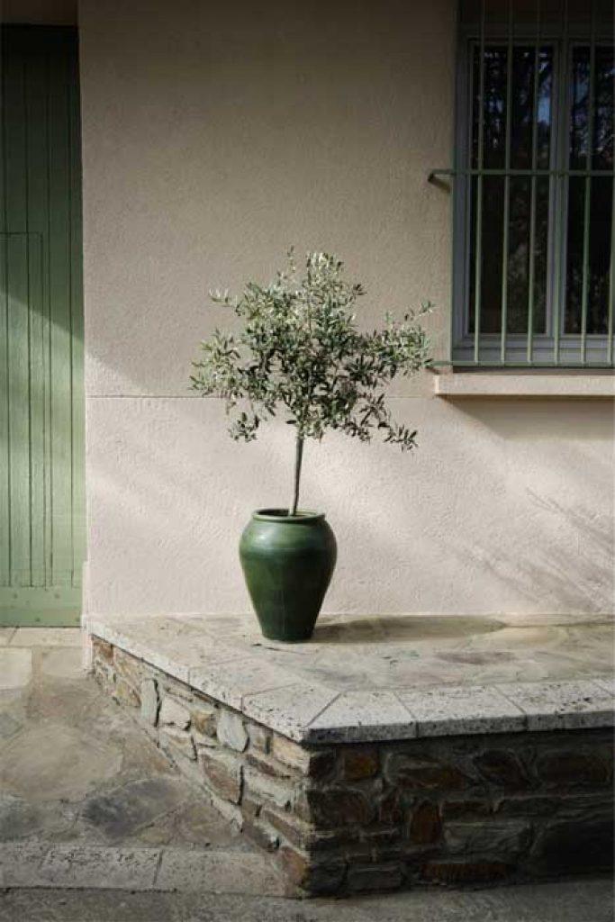 безопасные комнатные растения