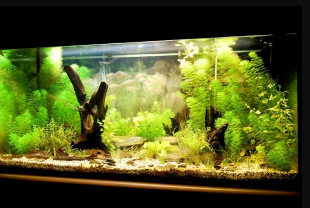 как сделать аквариум