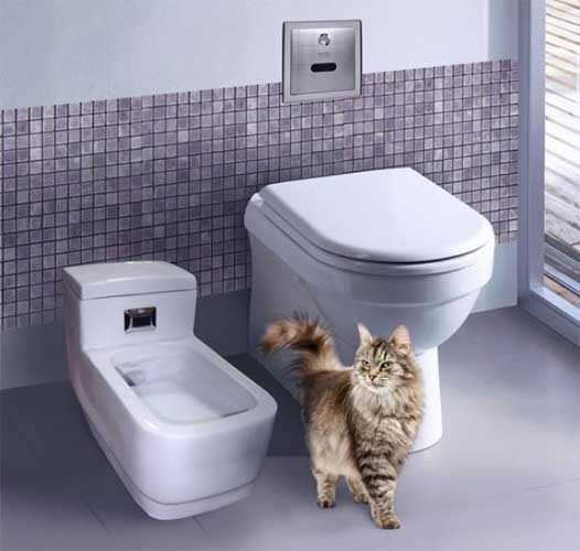 Туалет для кота