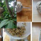 еда для птиц