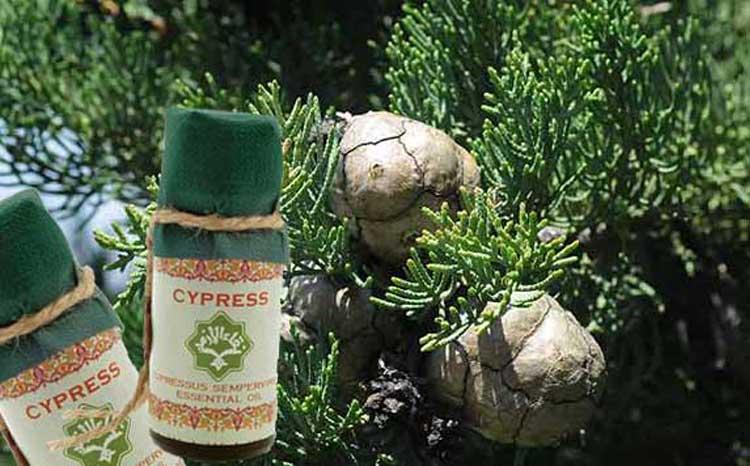 Кипарисовое масло