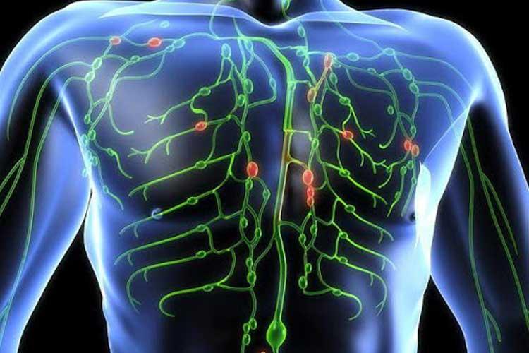 Пищевые продукты для чистки лимфатической системы