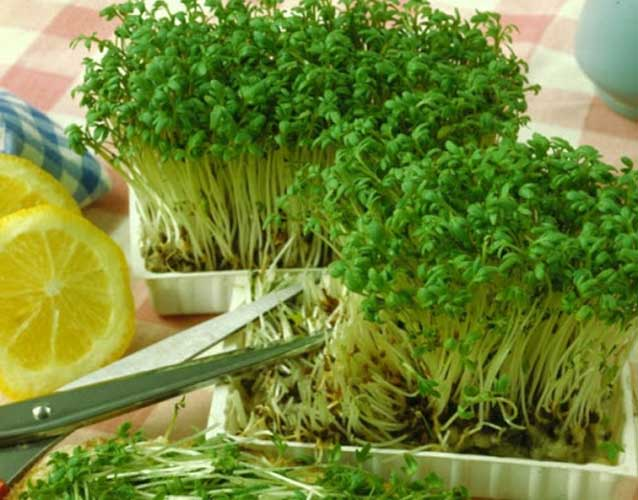 Кресс-салат