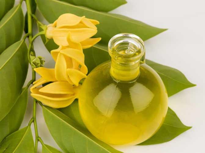 полезные свойства масла иланг иланг