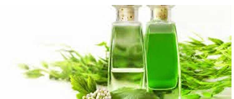 Эвкалиптовое масло лечебные свойства